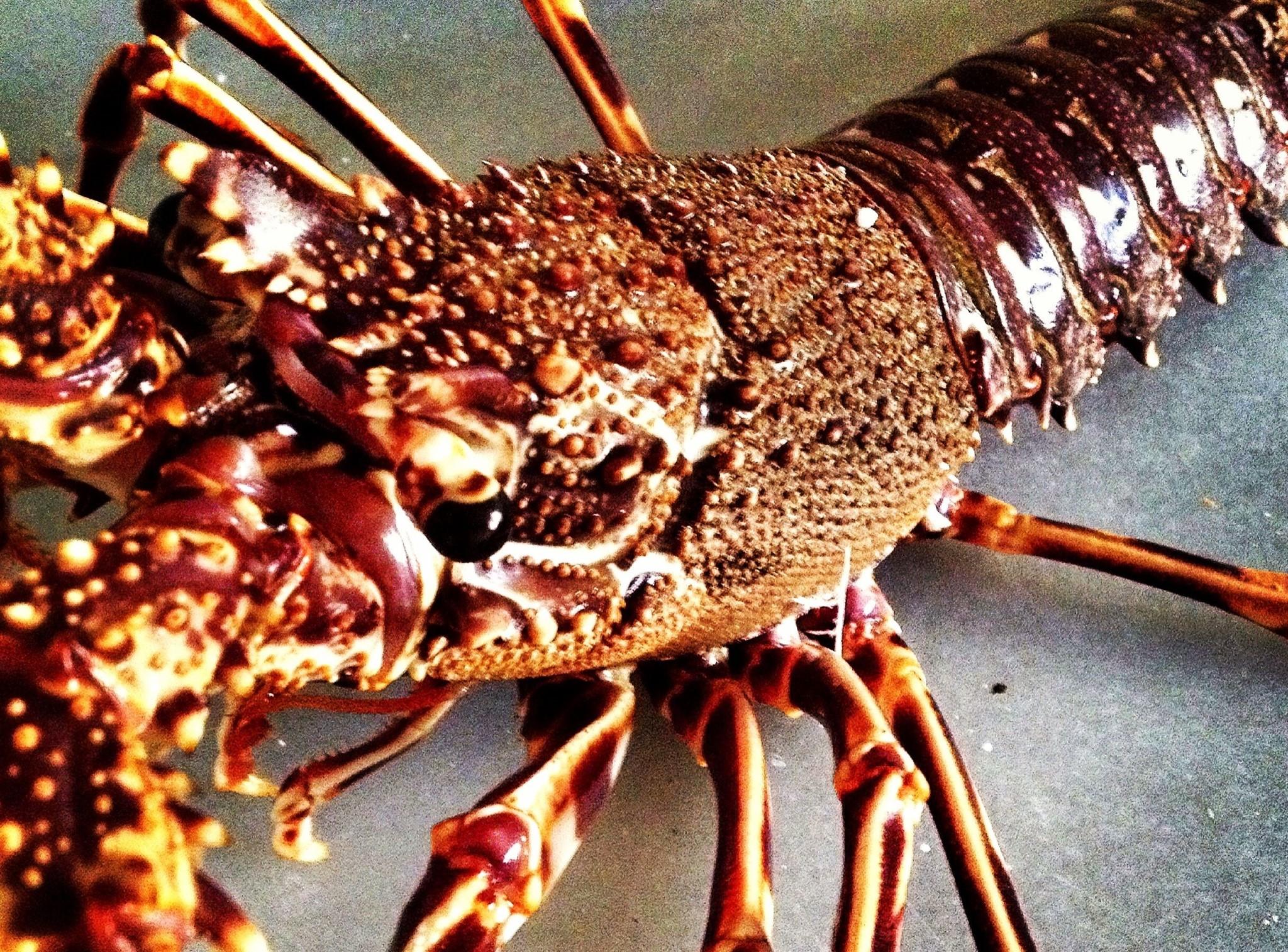 "Cocinar Langosta ""Lobster Experience"""