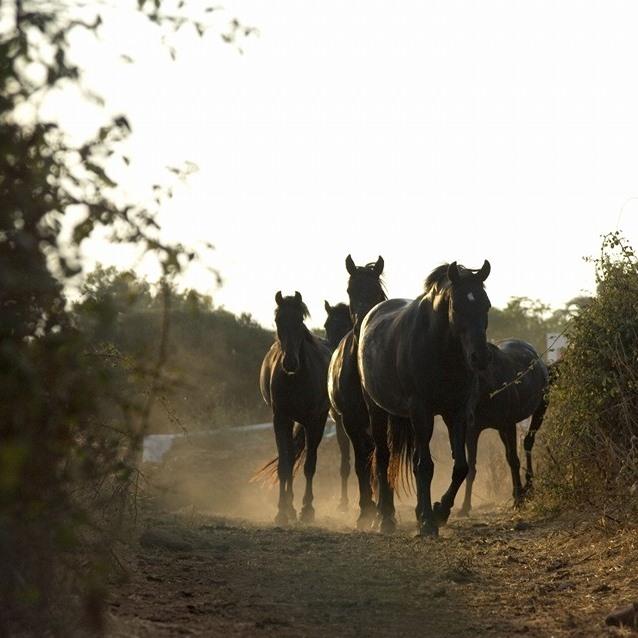 A caballo por la auténtica Menorca rural